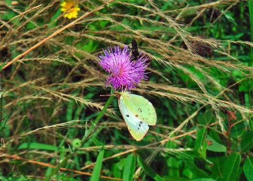 ミツバチと蝶R5217022JPEG変換.jpg