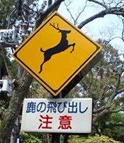 鹿飛び出し注意.jpg