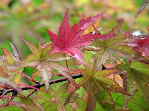 20100711紅葉露R0012496.jpg