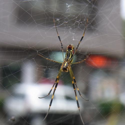 20111024蜘蛛R0119175.jpg