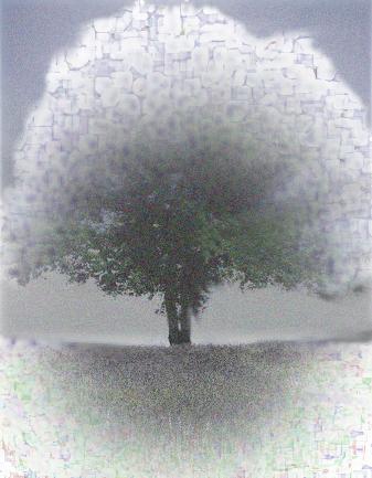 大樹雪.jpg