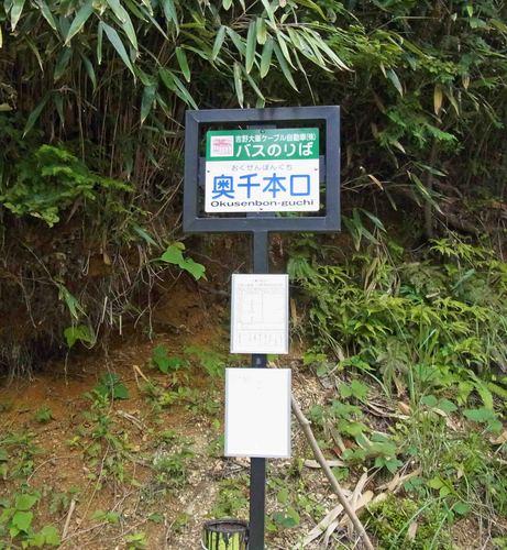 奥千本バス亭R0153238.jpg