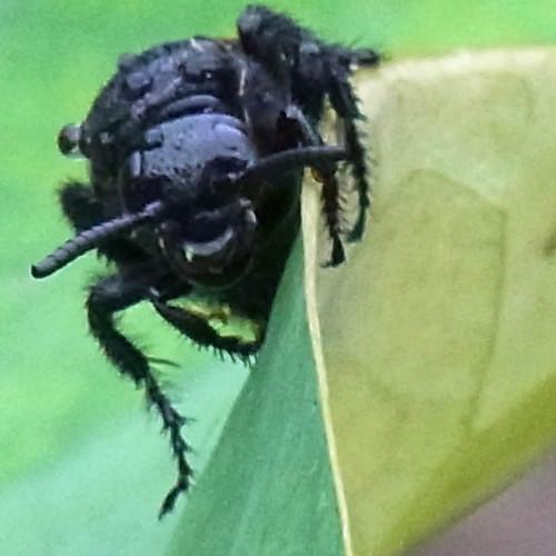 黒蜂R0153632.jpg