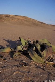 namibia021.jpg