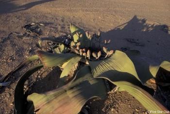 namibia023.jpg
