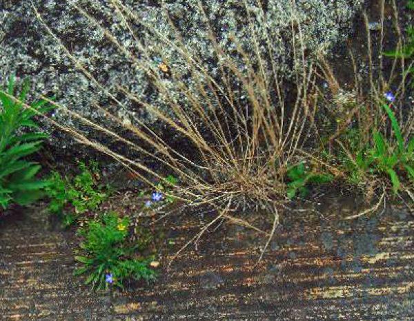 石に咲く花R5217001JPEG変換JPEG変換.jpg
