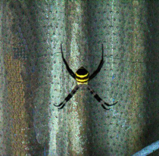 蜘蛛JPEG変換.jpg