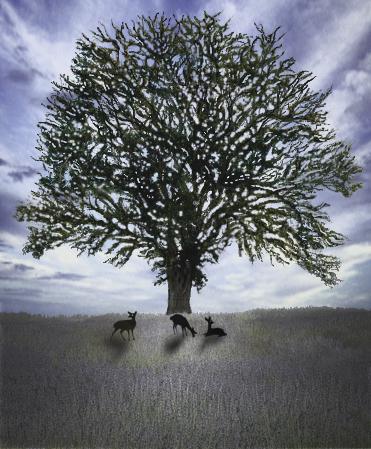 大樹木立木鹿小.jpg