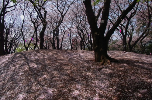 関山0685JPEG変換.jpg