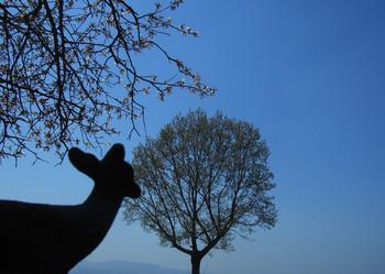 黒鹿我の樹sR5216315.jpg
