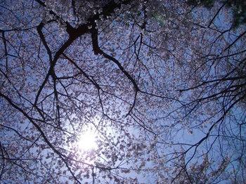 img283_050307_sakura_1.jpg